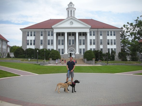 james madison university, great dane, golden retriever, link, eve